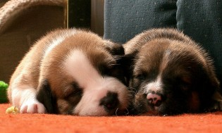 Spánek je důležitý k hubnutí