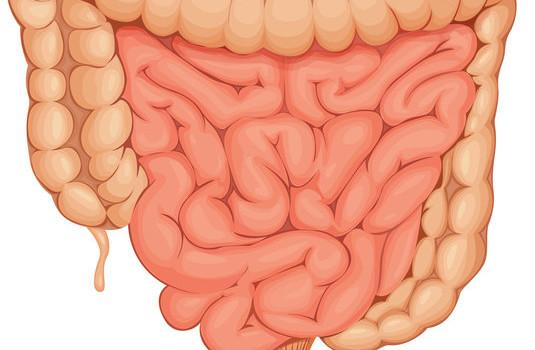 Detoxikace črev