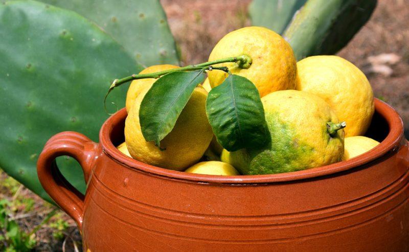bio citrony