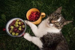 zahradní ovoce a kočka