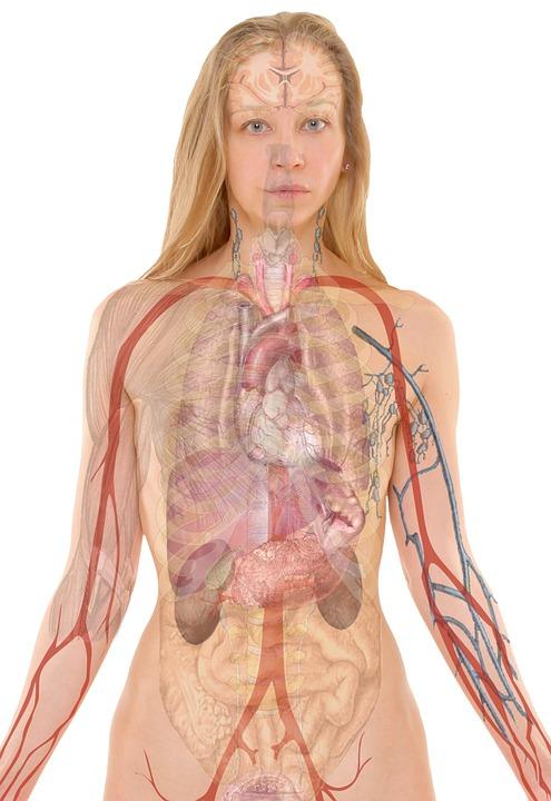 játra jako detoxikační orgán