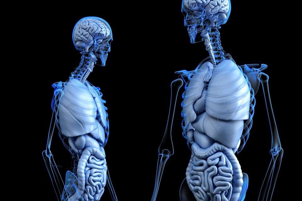 zdravé plíce