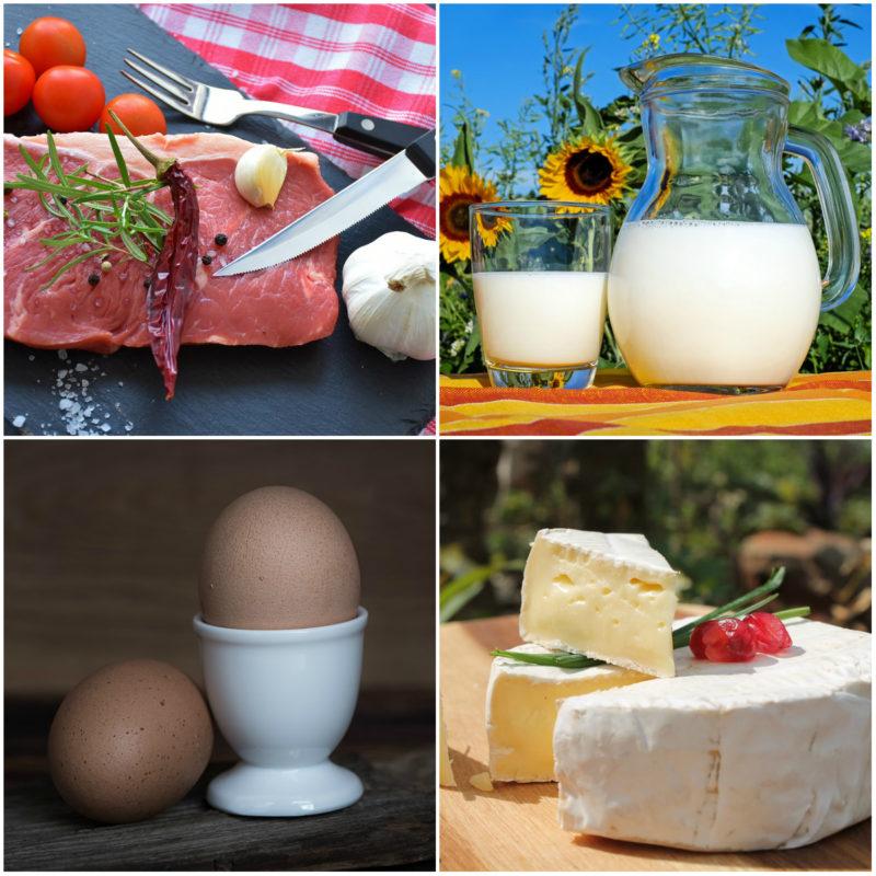 jídelníček při proteinové dietě