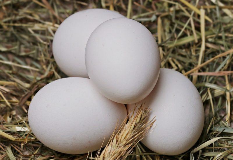 vejce jako zdroj bílkovin v proteinové dietě