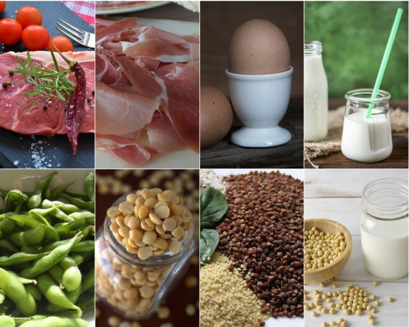 rostlinné a živočišné zdroje bílkovin