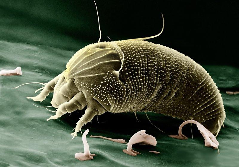 alergie na roztoče