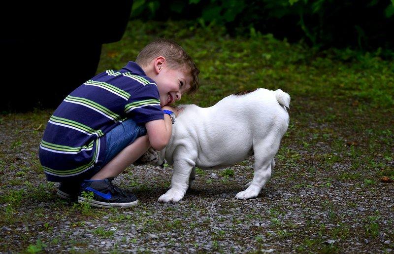 alergický kluk se psem