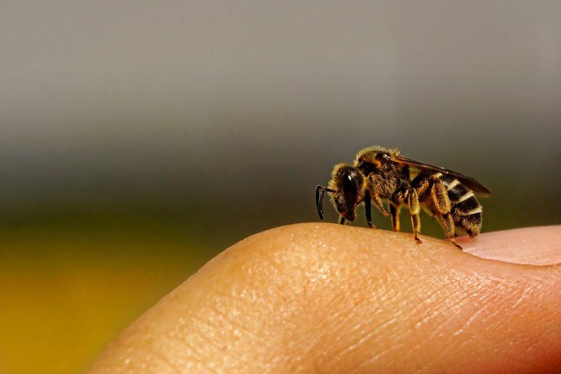 včelí bodnutí