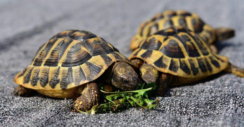 antialergické želvy
