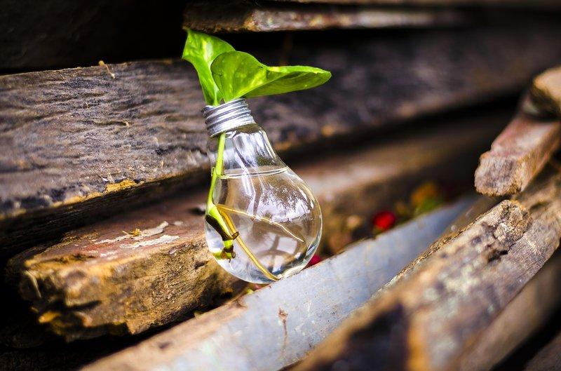 žárovka jako váza