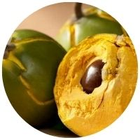 lucuma v Blendea SUPERBOOST