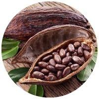 Kakao (Kakaovník pravý), Blendea SUPERCHILL